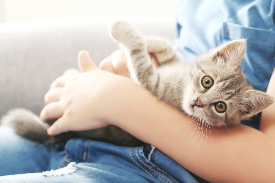Czym kierować się przy wyborze kota? Jak wybrać i gdzie kupić kota?