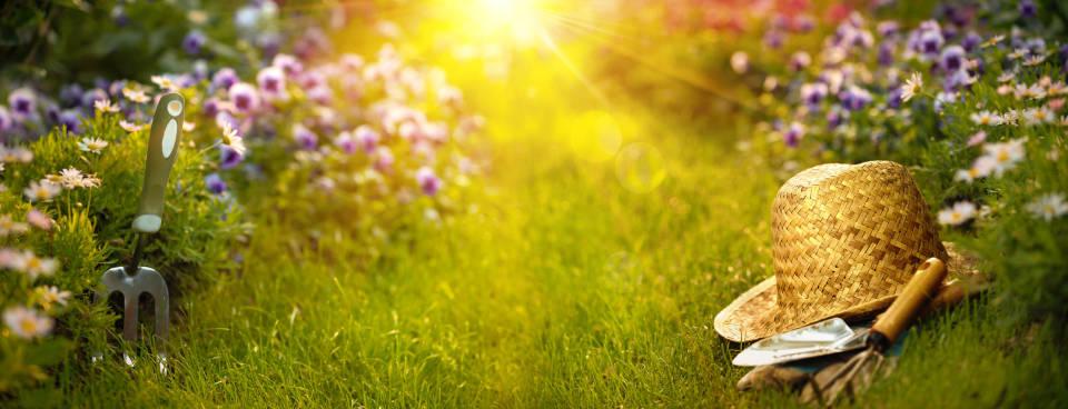 Jak wybierać najlepsze rośliny ogrodowe do warunków panujących w ogrodzie?