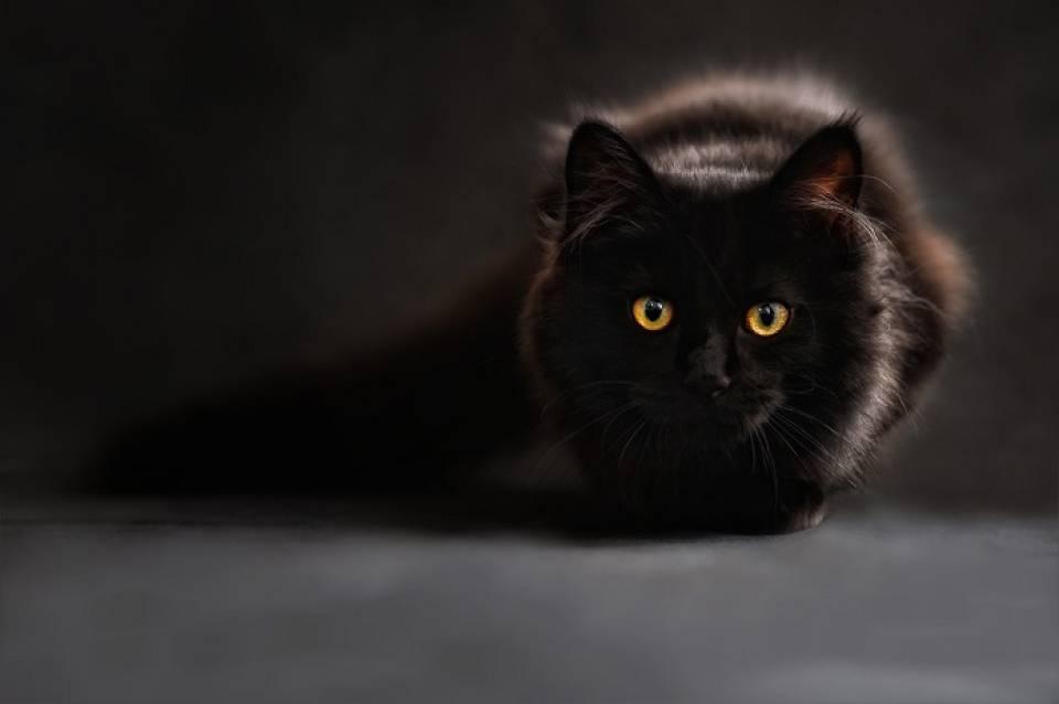 Domowa wyprawka dla kota - co kupić? Niezbędne akcesoria dla kota