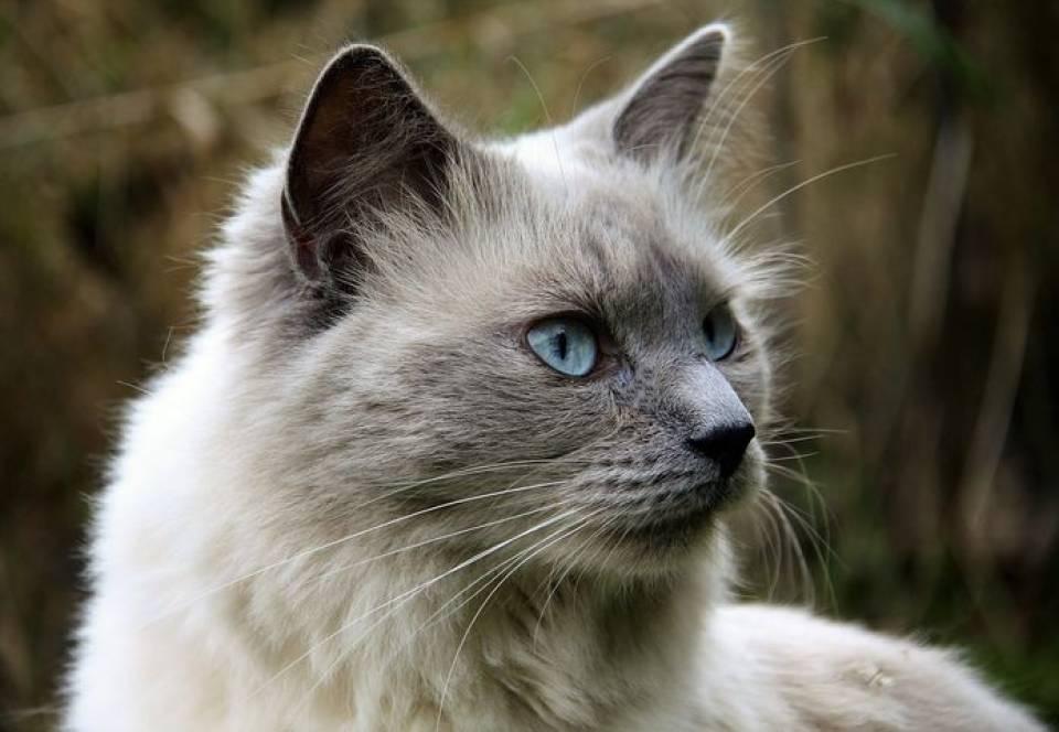 Jakie Są Najpopularniejsze Rasy Kotów Jaka Rasa Kota Pasuje Do