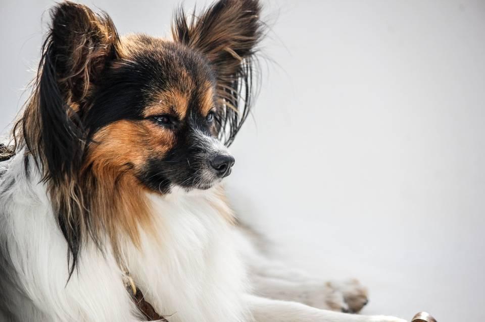 Psi fryzjer, hotel dla zwierząt, weterynarz - jak wybrać wśród usług dla zwierząt?