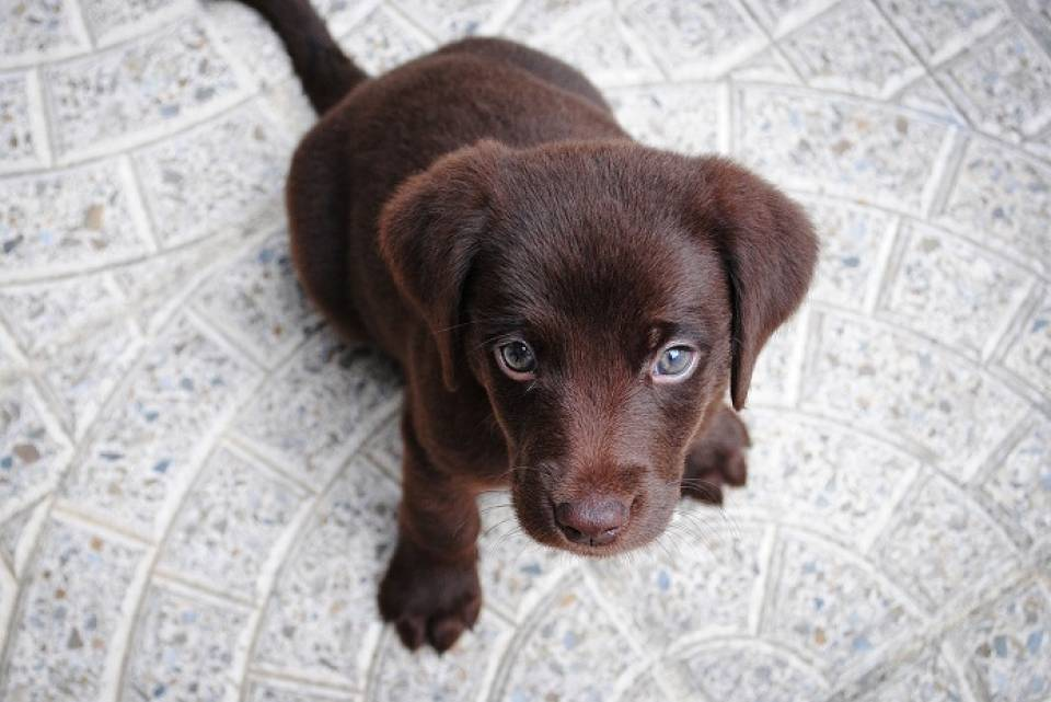 Wyprawka dla szczeniaka - co kupić dla psa?