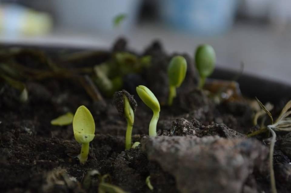 Czym nawozić rośliny? Środki ochrony roślin stosowane w ogrodzie i w rolnictwie