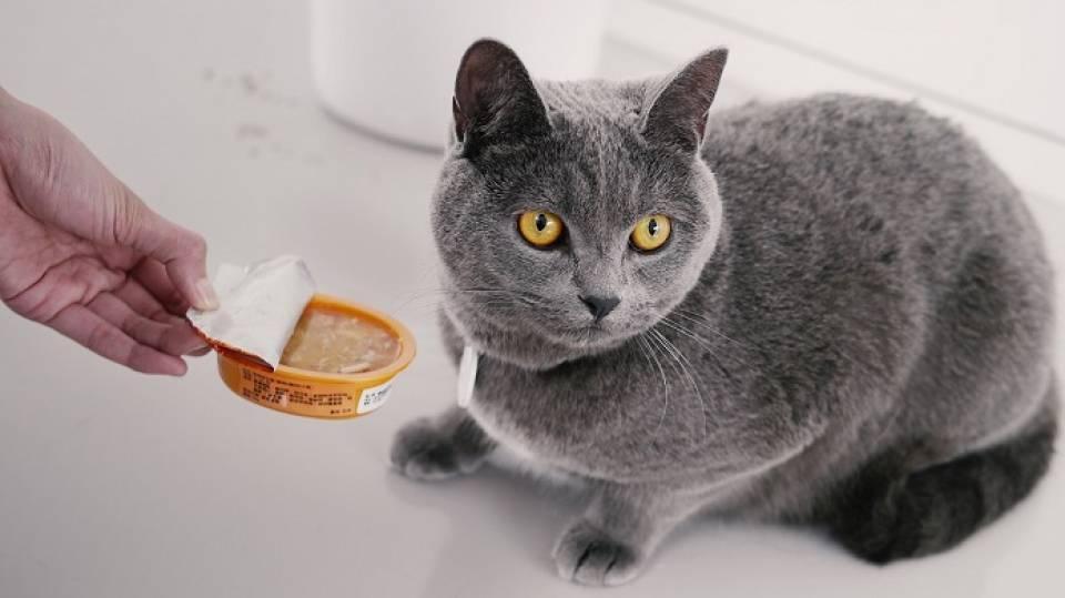 Jak odchudzić kota? Karmy, gadżety dla kota z nadwagą