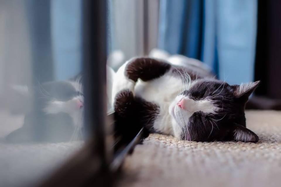Jak urządzić przyjazny dom dla kota? Jak osiatkować balkon?