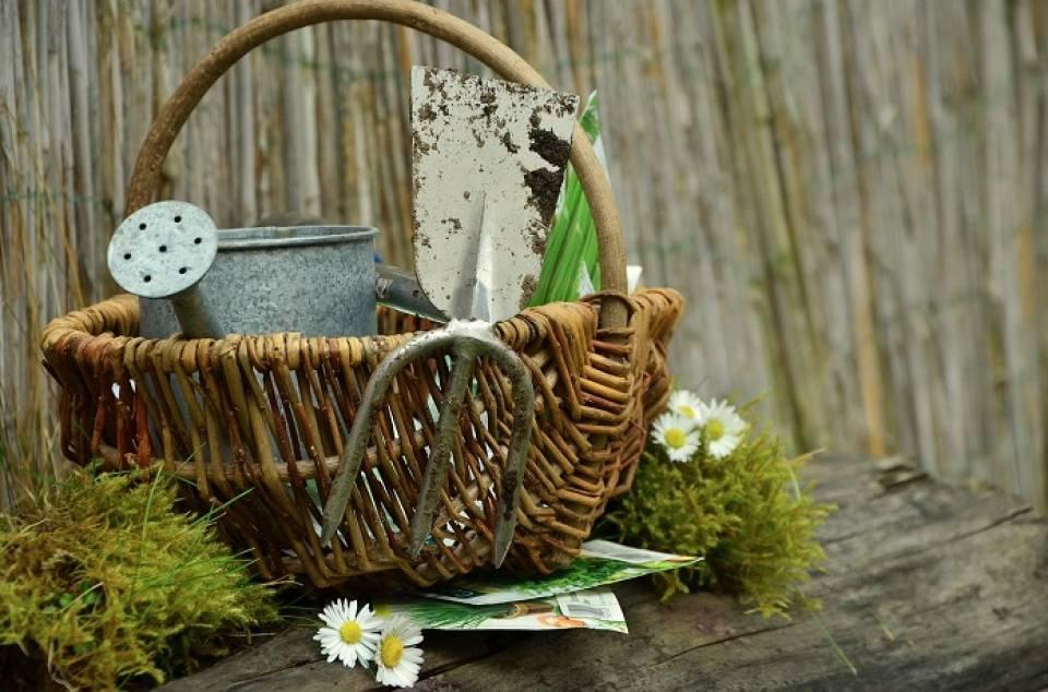Jakie narzędzia są potrzebne do pielęgnacji ogrodu?