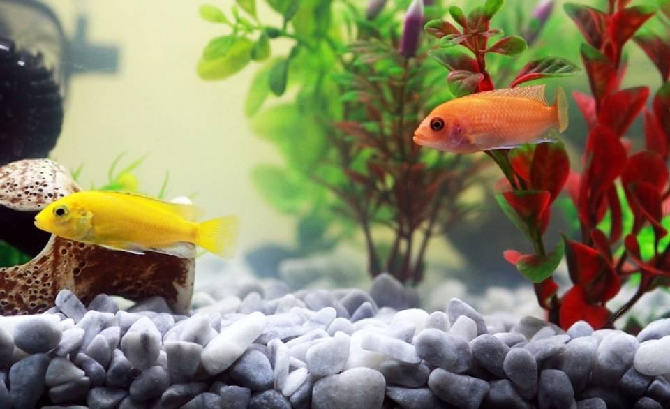 Jak hodować rybki? Jak przygotować akwarium dla ryb?