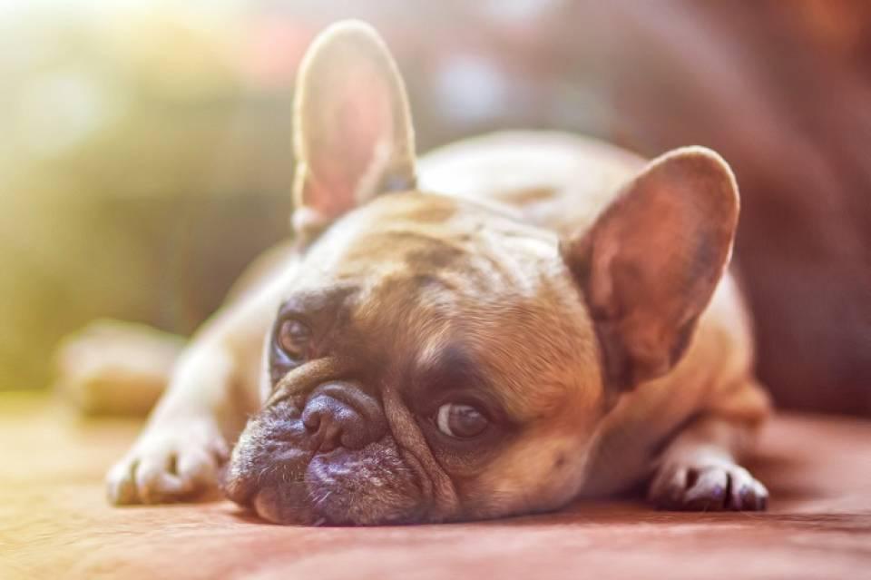 Jakie są najpopularniejsze rasy psów? Czym kierować się przy wyborze psa?