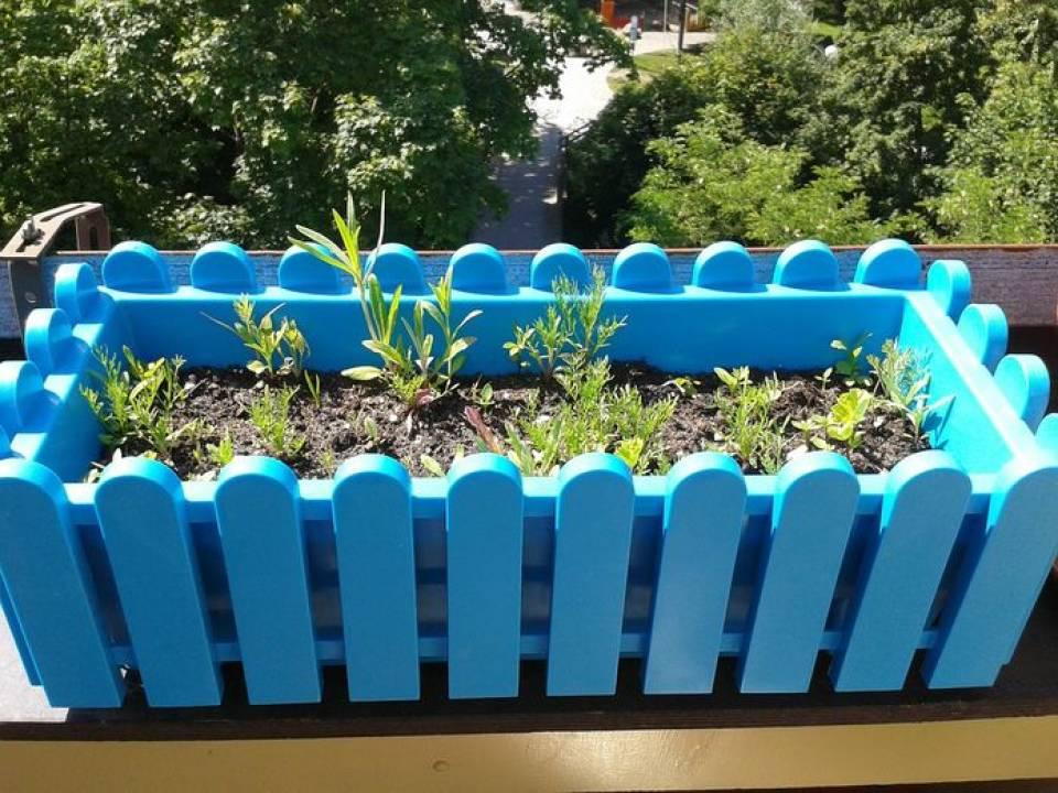 Jakie zioła uprawiać na balkonie? Kiedy siać zioła?