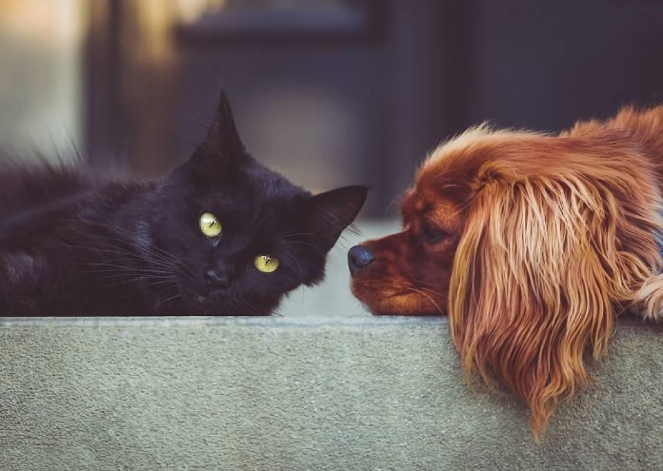 Pies, kot, świnka morska... Jakie zwierzę domowe wybrać dla dziecka?