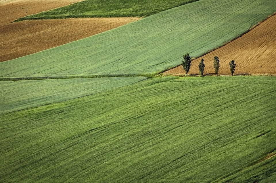 Działki budowlane, rekreacyjne, grunty rolne… W co warto zainwestować?