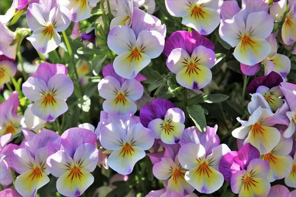 Jak zadbać o ogród wiosną? Jakie prace w ogrodzie warto wykonać i dlaczego?