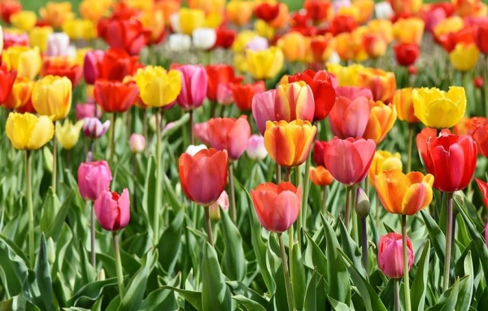 5 gatunków kwiatów, które warto mieć w swoim ogrodzie
