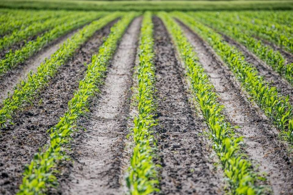 Rośliny okopowe, pastewne, przemysłowe… Produkcja jakich roślin jest najbardziej dochodowa?