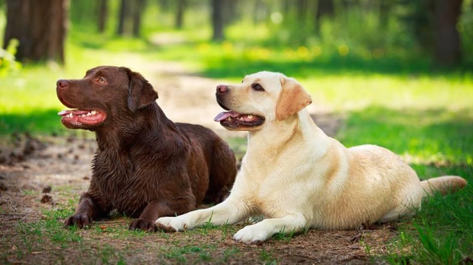 Psy Rasowe Kundle Szczeniaki Na Sprzedaż Sprzedajemypl